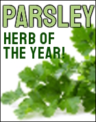 Parsley Herb of the Year 2020